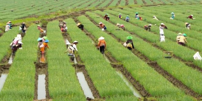 Bulan Pertama 2021, Ekspor Pertanian Naik 13 Persen