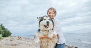 Cara Memilih Anjing Yang Tepat Sesuai Personality-mu