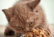 Cara Merawat Kucing Saat Tidak Nafsu Makan