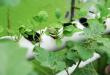 Jenis Sayuran Hidroponik dan Perawatan Yang Benar