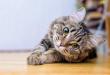 Kenali Bahasa Tubuh Kucing, Buat Ia Semakin Dekat