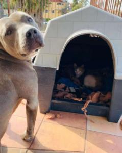 Kisah Hades, Anjing Garang Berhati Mulia