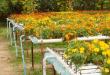 Menanam Bunga dengan Cara Hidroponik