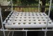 Persiapan Menanam Hidroponik Agar Tumbuh Subur