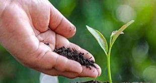 Pupuk Kandang, Bagus Untuk Tanaman Organik