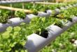 Sistem Hidroponik, Menanam Tanpa Media Tanah