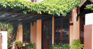 Tanaman Hias Merambat Yang Bisa Percantik Rumah
