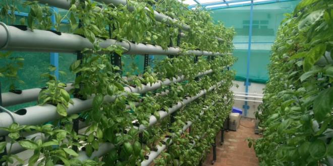 Tips Penting dalam Membangun Kebun Hidroponik