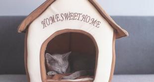 Tips Pindah Rumah Kucing untuk Meminimalisir Stress