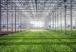 Bertani Hidroponik, Cara Tepat Swasembada Pangan