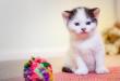 Hal Penting untuk Dilakukan Sebelum Pelihara Kucing