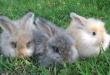 Lucu nan Imut, Berikut Beberapa Jenis Kelinci Anggora