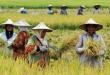 Sektor Pertanian Perlu Lebih Banyak Perhatian Negara