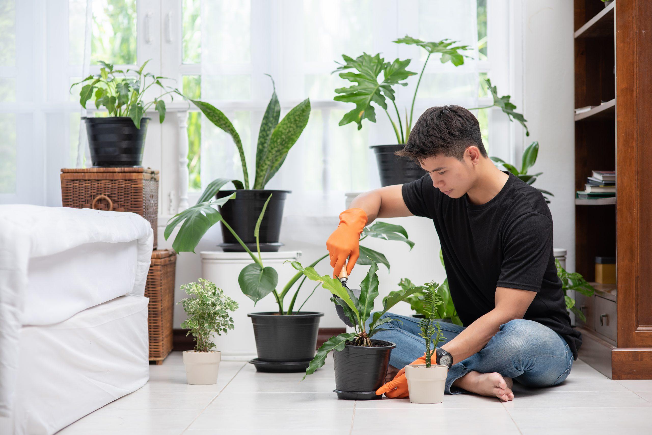 Tanaman Hias Daun Untuk Percantik Rumah Anda