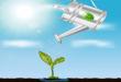 Cara Membuat Pupuk Cair Lidah Buaya (Soil Drench)